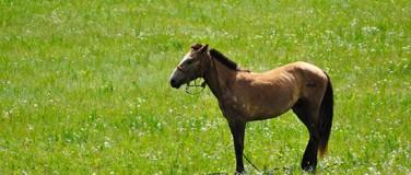 Horsevib for behandlere