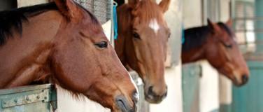 Horsevib for konkurranse-hester